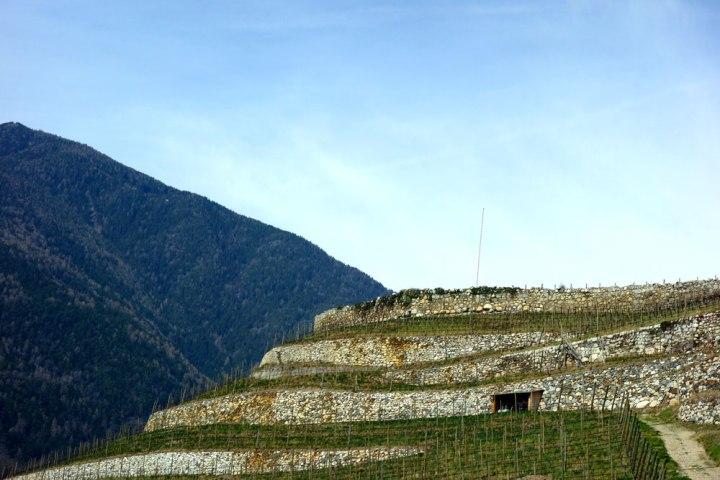 Südtirol_wein